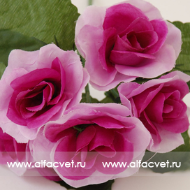 роза-фиалка цвета фиолетовый 7
