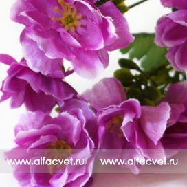 сакура цвета фиолетовый 7