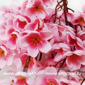 сакура цвета розовый 5