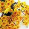 букет сакуры цвета желтый 1