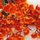 букет сакуры цвета оранжевый 2
