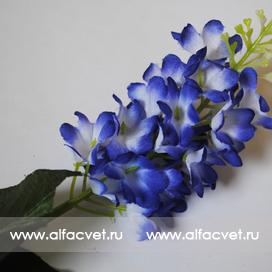 сирень цвета синий с белым 58
