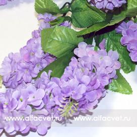 сирень цвета фиолетовый 7