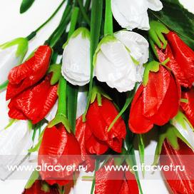 тюльпаны цвета красный с белым 21