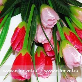 тюльпаны цвета красный с розовым 42