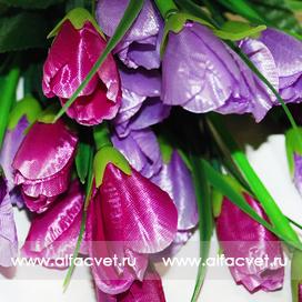тюльпаны цвета фиолетовый с сиреневым 50