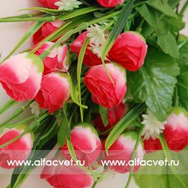 тюльпаны цвета розовый с белым 14