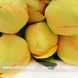 букет тюльпанов цвета желтый 1