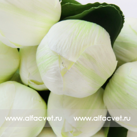 букет тюльпанов цвета белый 6