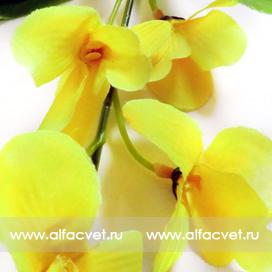 ветка орхидей цвета желтый 1