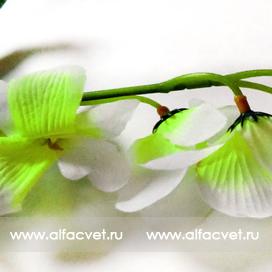 ветка орхидей цвета зеленый с белым 34