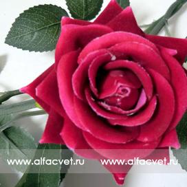 ветка роз цвета малиновый 11