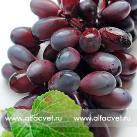 виноград большой цвета фиолетовый 7