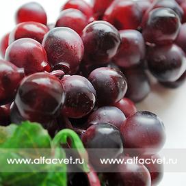 виноград средний цвета фиолетовый 7