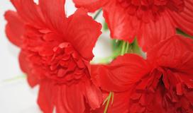 Цветы малым оптом в санкт-петербурге